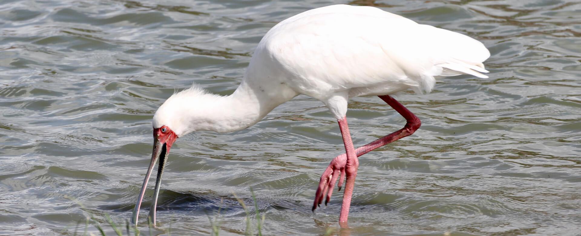 Upepo Safari - Stork