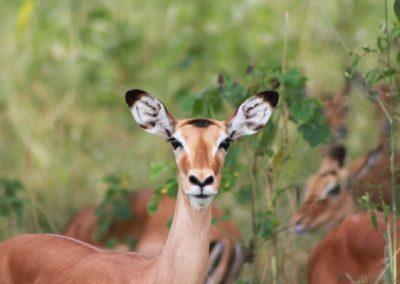 01 - Upepo Safari - Animals