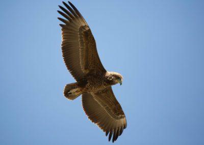 01 - Upepo Safari - Birds