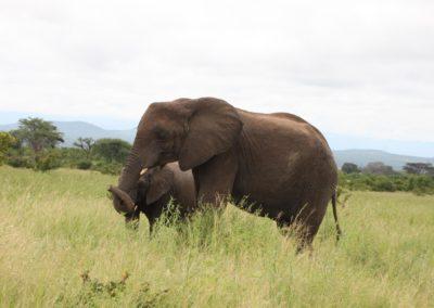 02 - Upepo Safari - Animals
