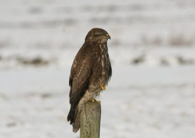 02 - Upepo Safari - Birds