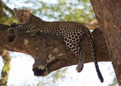 03 - Upepo Safari - Animals