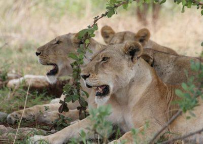 04 - Upepo Safari - Animals