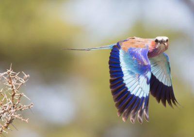 04 - Upepo Safari - Birds