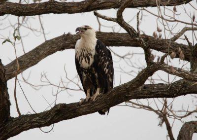 05 - Upepo Safari - Birds