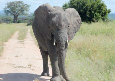 06 - Upepo Safari - Animals