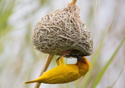 06 - Upepo Safari - Birds