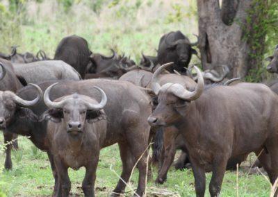 07 - Upepo Safari - Animals