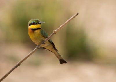 07 - Upepo Safari - Birds