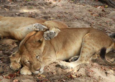 08 - Upepo Safari - Animals