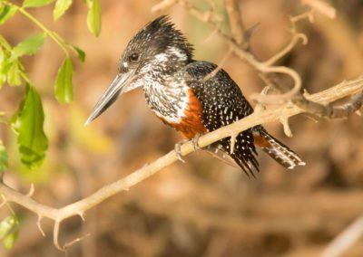 08 - Upepo Safari - Birds