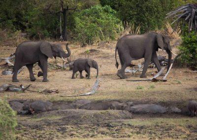09 - Upepo Safari - Animals