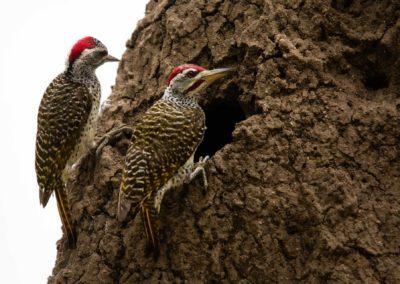 09 - Upepo Safari - Birds