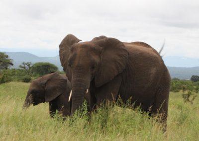 10 - Upepo Safari - Animals