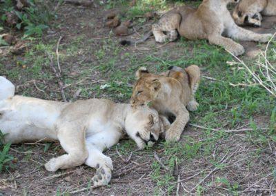 11 - Upepo Safari - Animals
