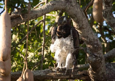 11 - Upepo Safari - Birds