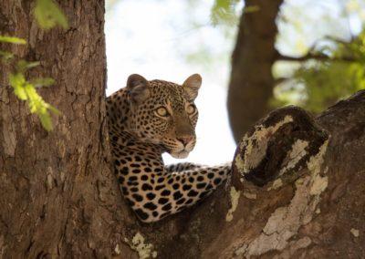 12 - Upepo Safari - Animals