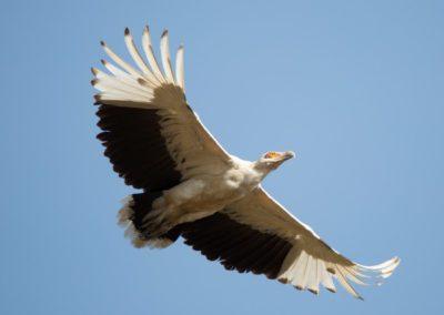 12 - Upepo Safari - Birds