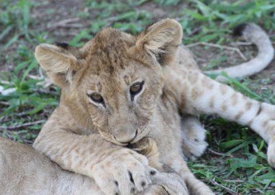 14 - Upepo Safari - Animals