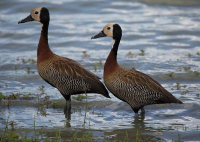 14 - Upepo Safari - Birds