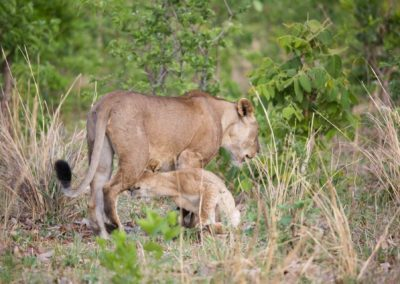 15 - Upepo Safari - Animals