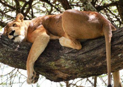 16 - Upepo Safari - Animals