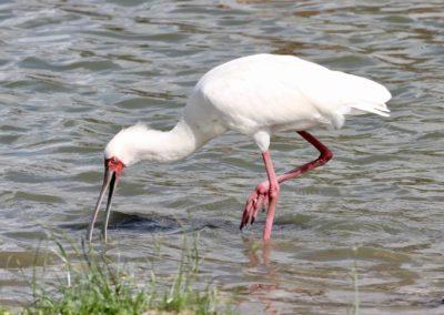 16 - Upepo Safari - Birds