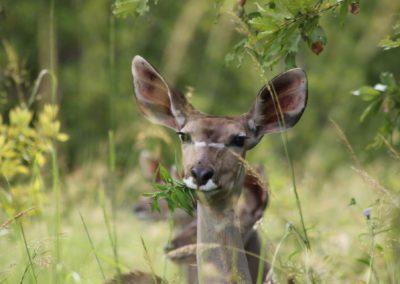 17 - Upepo Safari - Animals