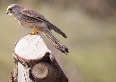 17 - Upepo Safari - Birds