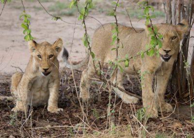 18 - Upepo Safari - Animals