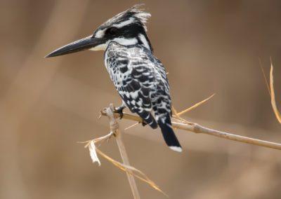 18 - Upepo Safari - Birds