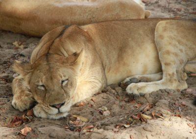 19 - Upepo Safari - Animals