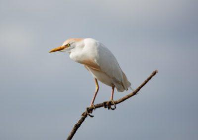 19 - Upepo Safari - Birds