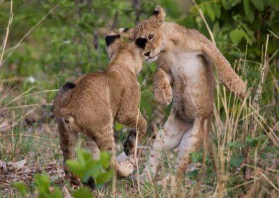 20 - Upepo Safari - Animals