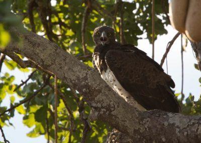 20 - Upepo Safari - Birds