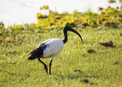 21 - Upepo Safari - Birds