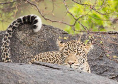 22 - Upepo Safari - Animals