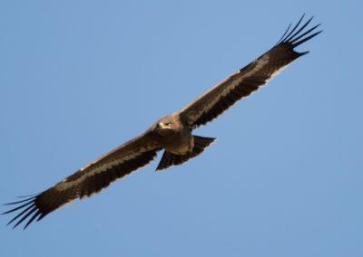 22 - Upepo Safari - Birds