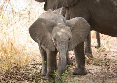 23 - Upepo Safari - Animals