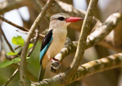 23 - Upepo Safari - Birds