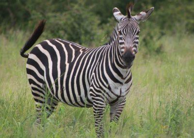 24 - Upepo Safari - Animals