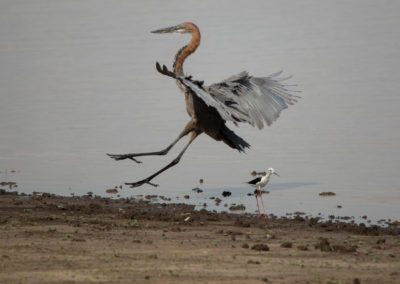 24 - Upepo Safari - Birds