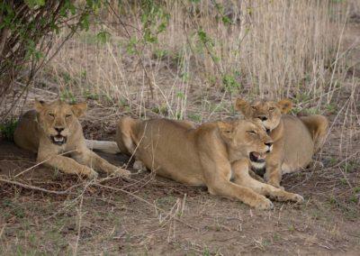 25 - Upepo Safari - Animals