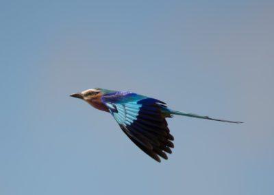 25 - Upepo Safari - Birds