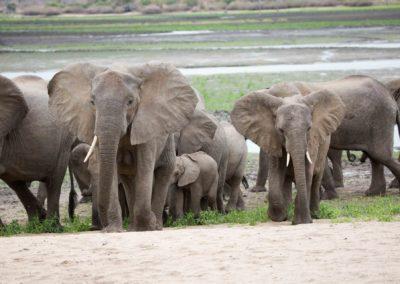 26 - Upepo Safari - Animals
