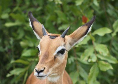 27 - Upepo Safari - Animals