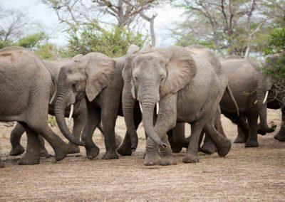 28 - Upepo Safari - Animals