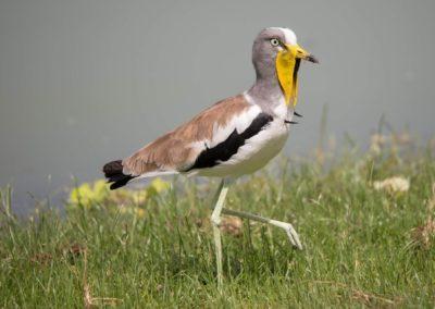 28 - Upepo Safari - Birds