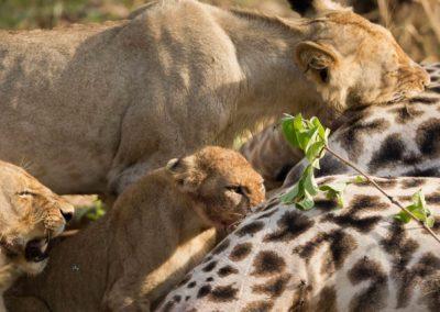 29 - Upepo Safari - Animals