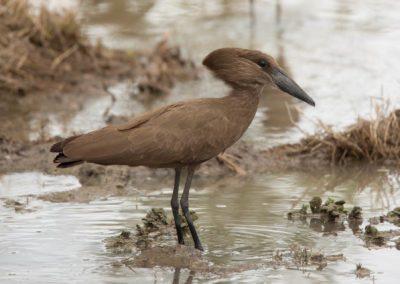 29 - Upepo Safari - Birds